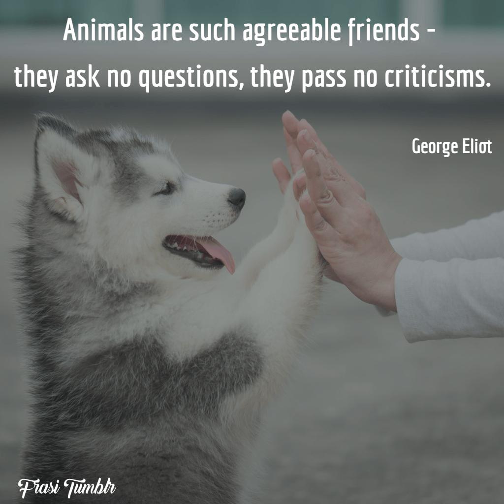 frasi-animali-inglese-amici-simpatici-critiche