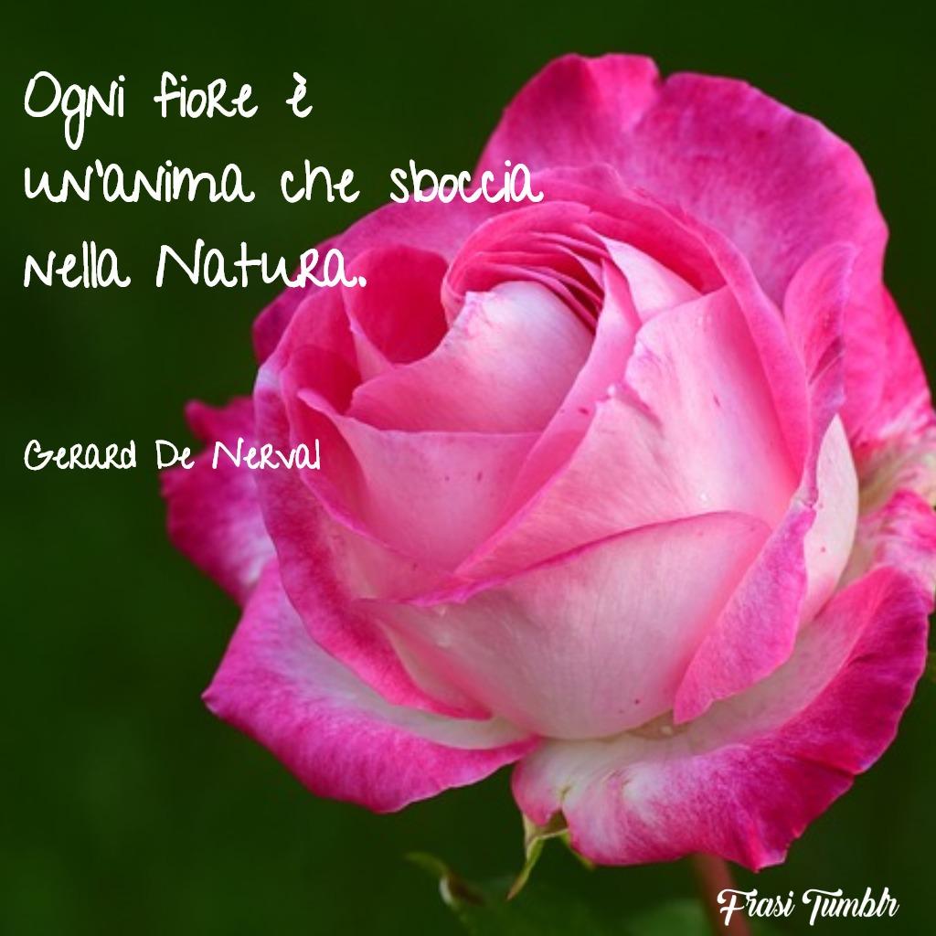frasi-bellezza-natura-fiore-sboccia