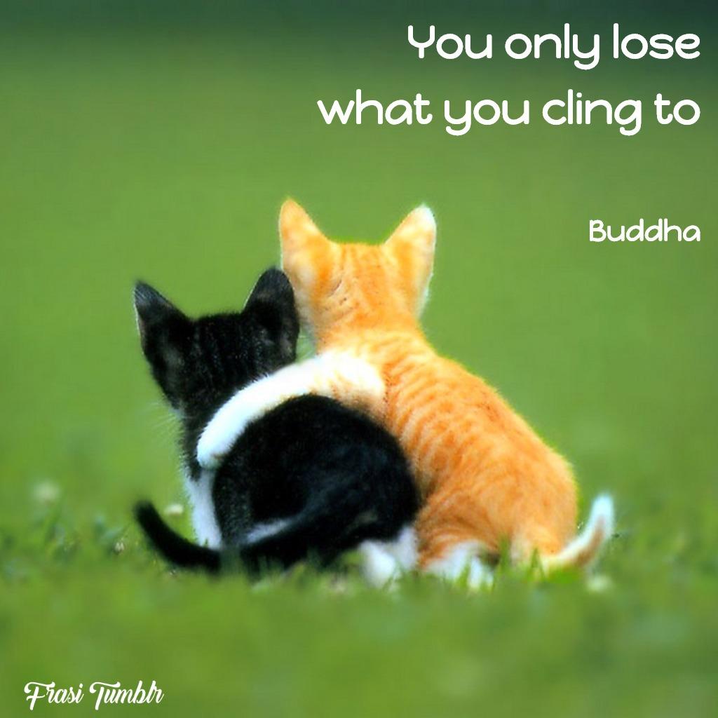 frasi-buddha-inglese-perdi-cose