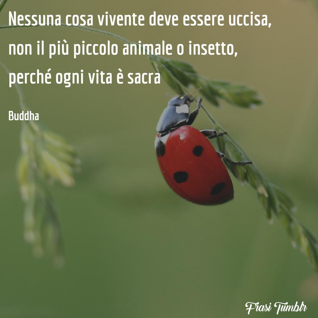 frasi-buddha-vita-cosa-vivente-uccisa-insetto