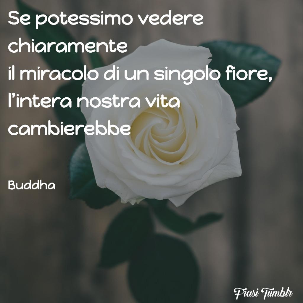 frasi-buddha-vita-miracolo-fiore