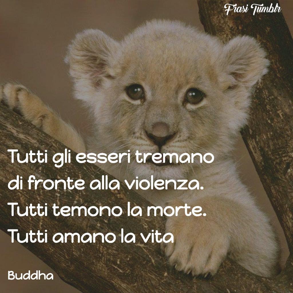 frasi-buddha-vita-violenza
