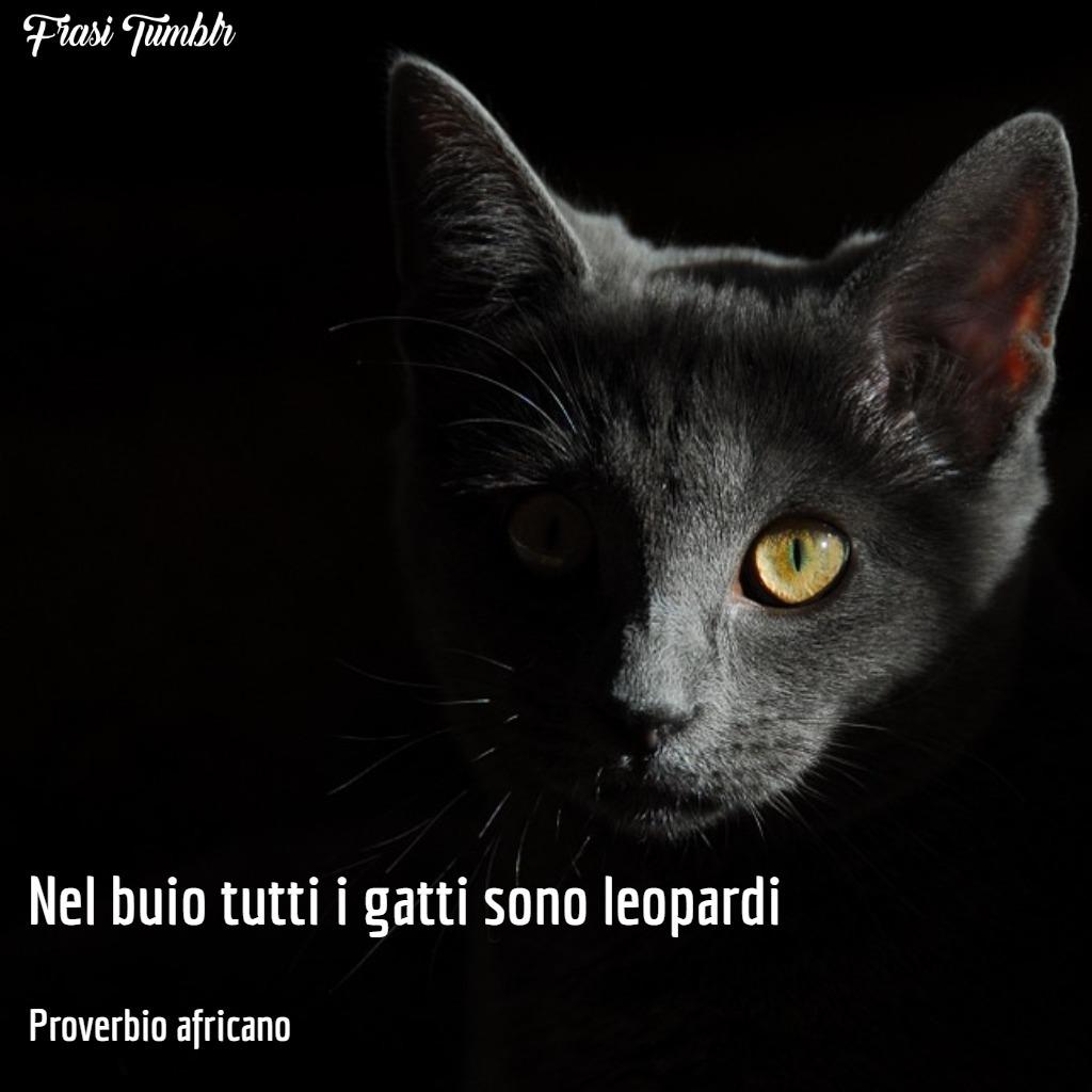 frasi-proverbi-africani-gatto-notte-leopardo