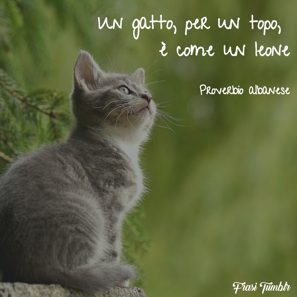frasi-proverbi-albanesi-gatto-leone