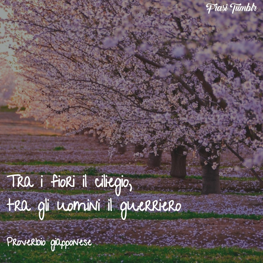 frasi-proverbi-giapponesi-ciliegio-guerriero