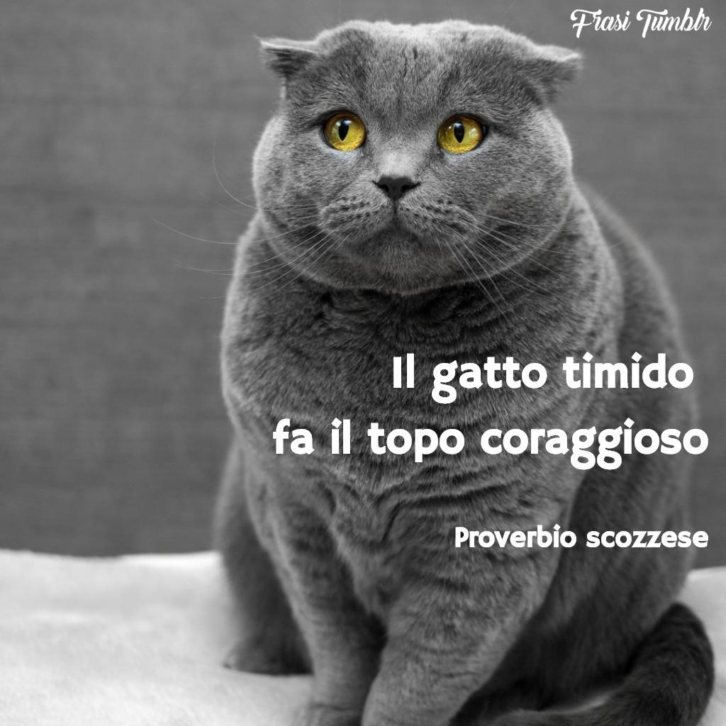 frasi-proverbi-scozzesi-gatto-topo