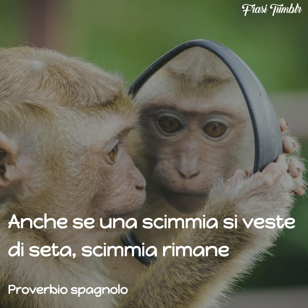 frasi-proverbi-spagnoli-scimmia-seta