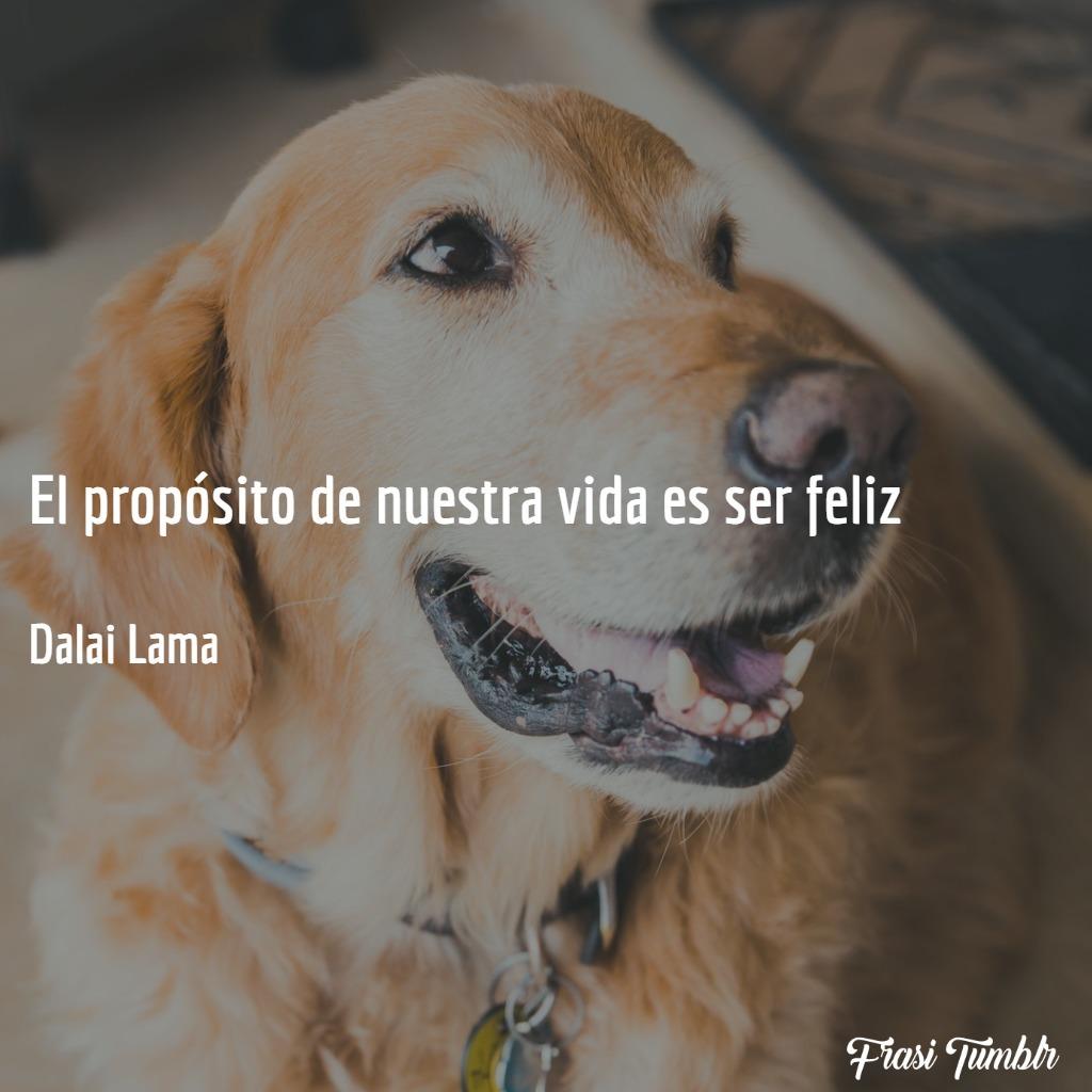frasi-vita-spagnolo-felice