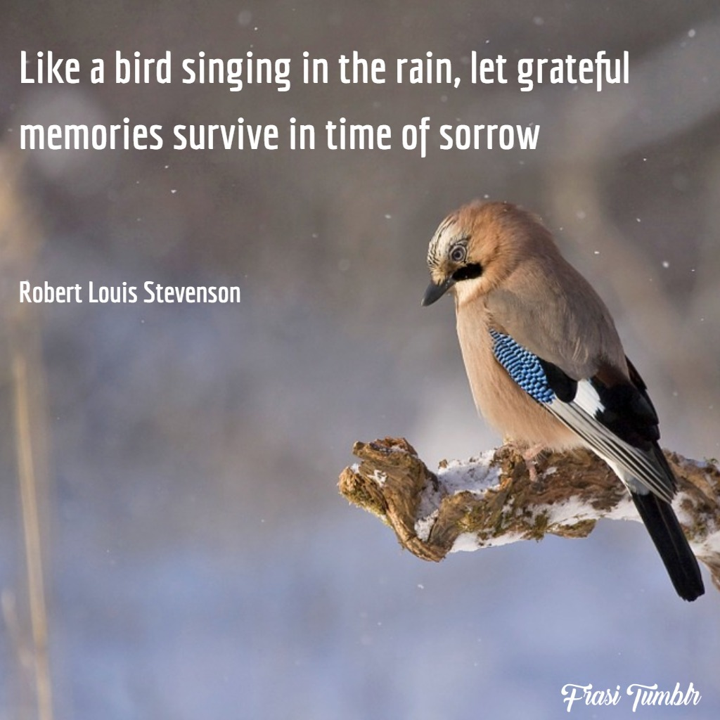 frasi-dolore-inglese-uccello-canta