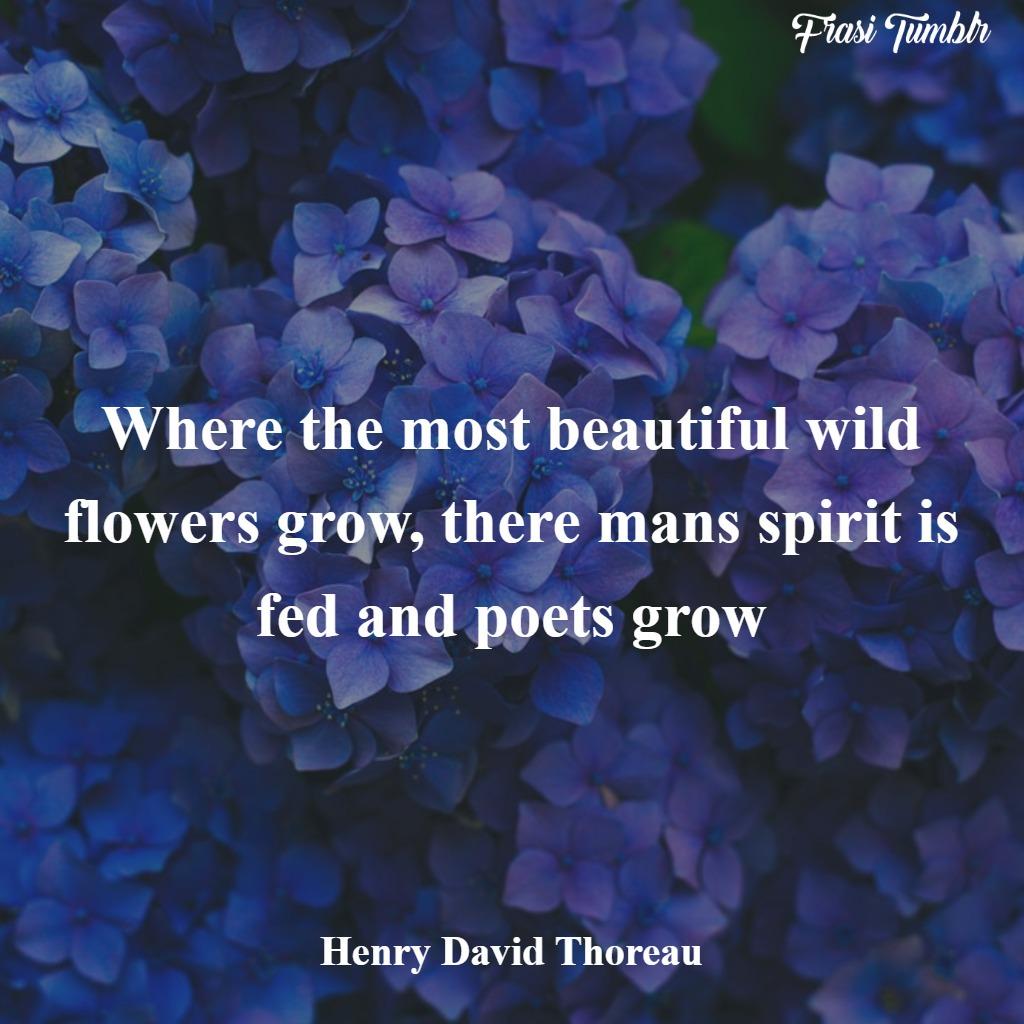 frasi-fiori-inglese-bellezza