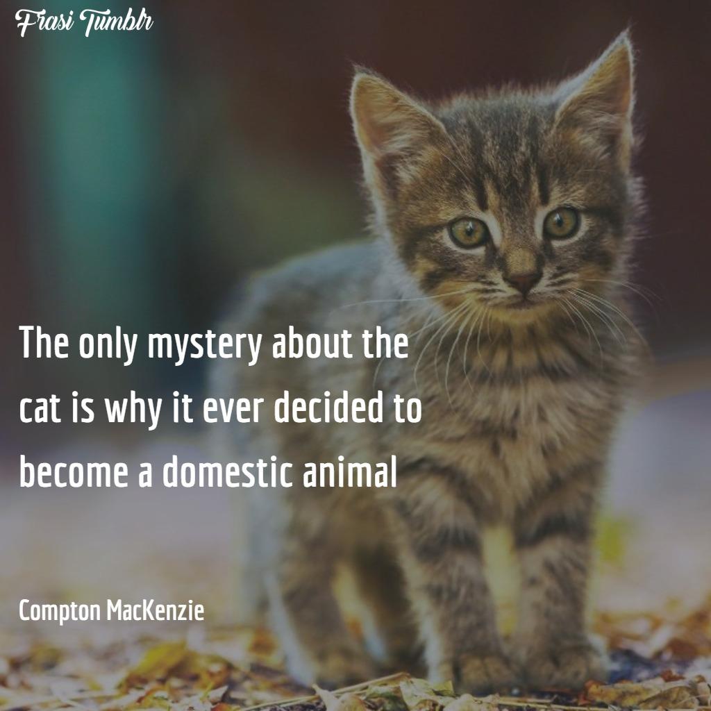 frasi-gatti-inglese-animale-domestico-mistero