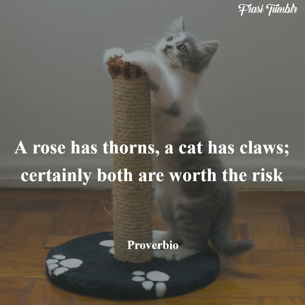 frasi-gatti-inglese-artigli-rose
