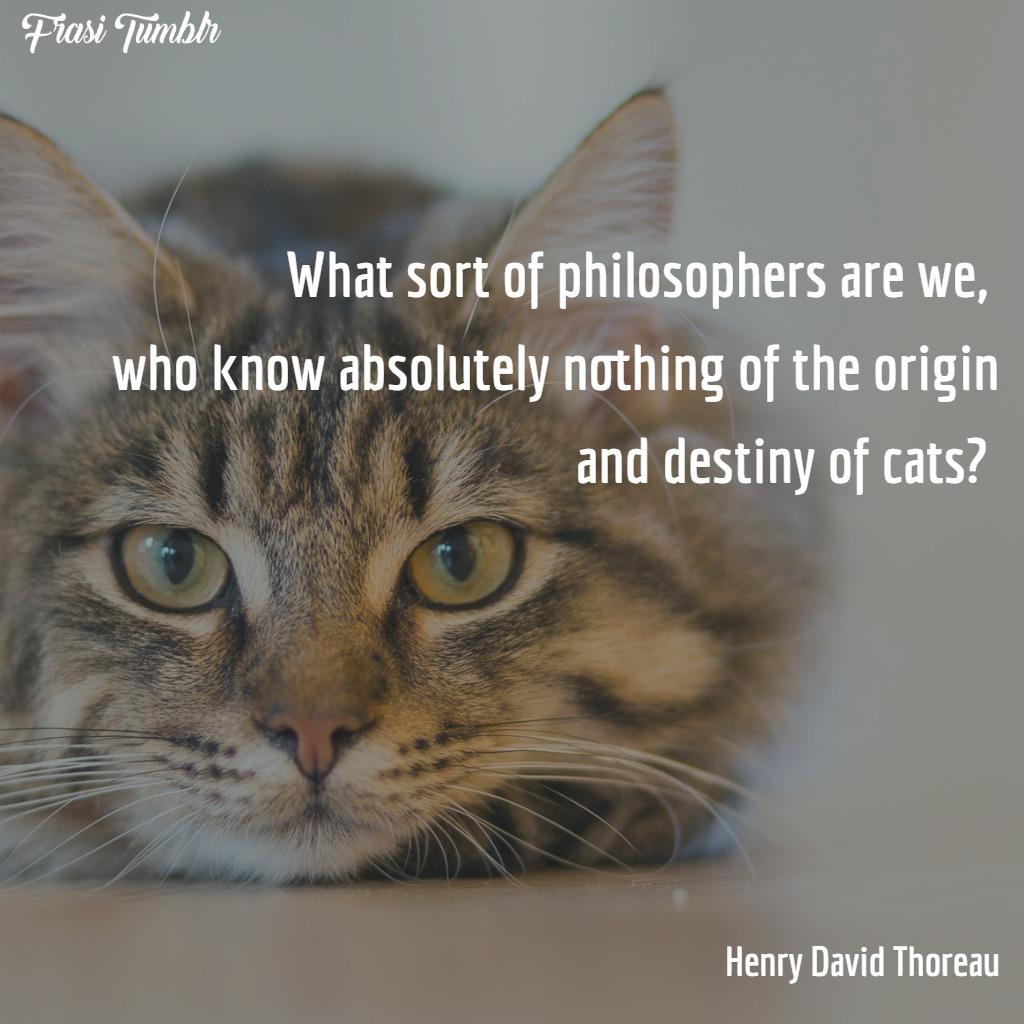 frasi-gatti-inglese-filosofi