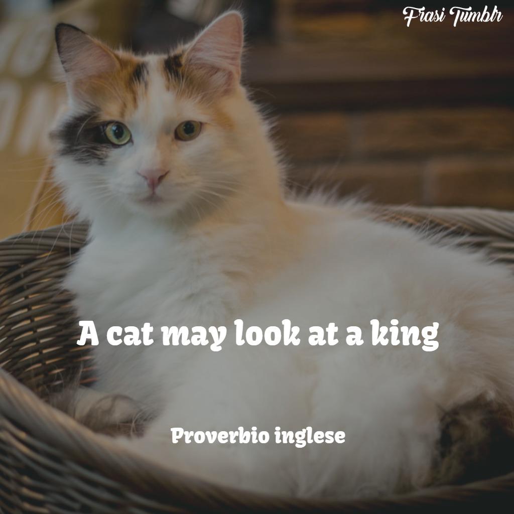 frasi-gatti-inglese-guardare-re