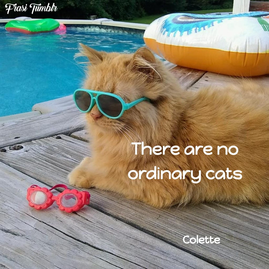frasi-gatti-inglese-normali