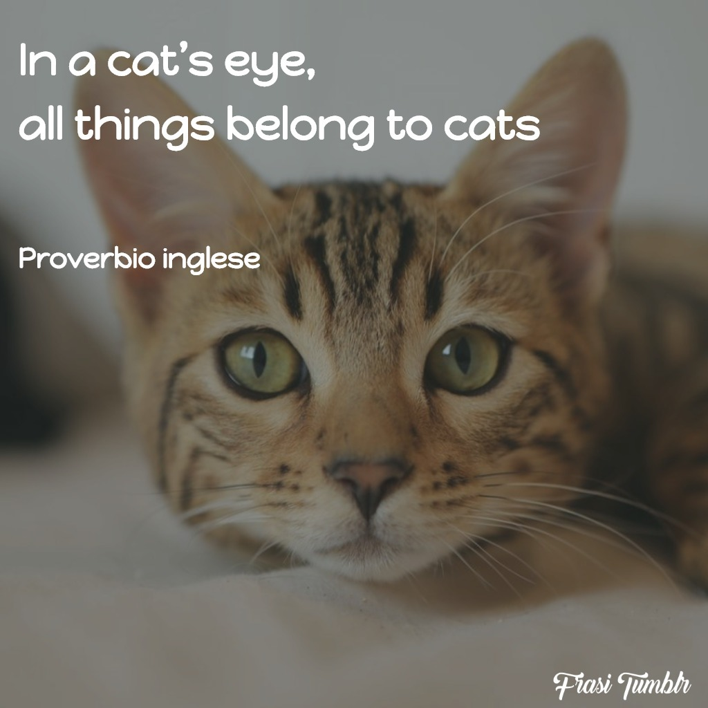 frasi-gatti-inglese-occhi