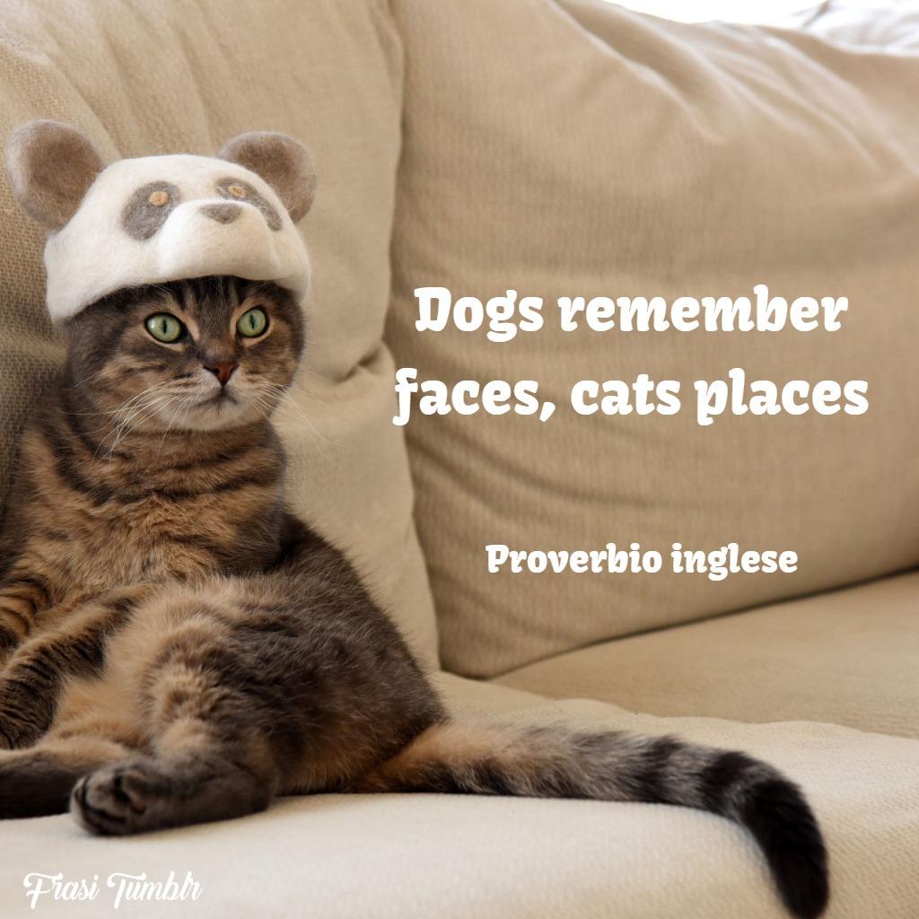 frasi-gatti-inglese-posti-luoghi