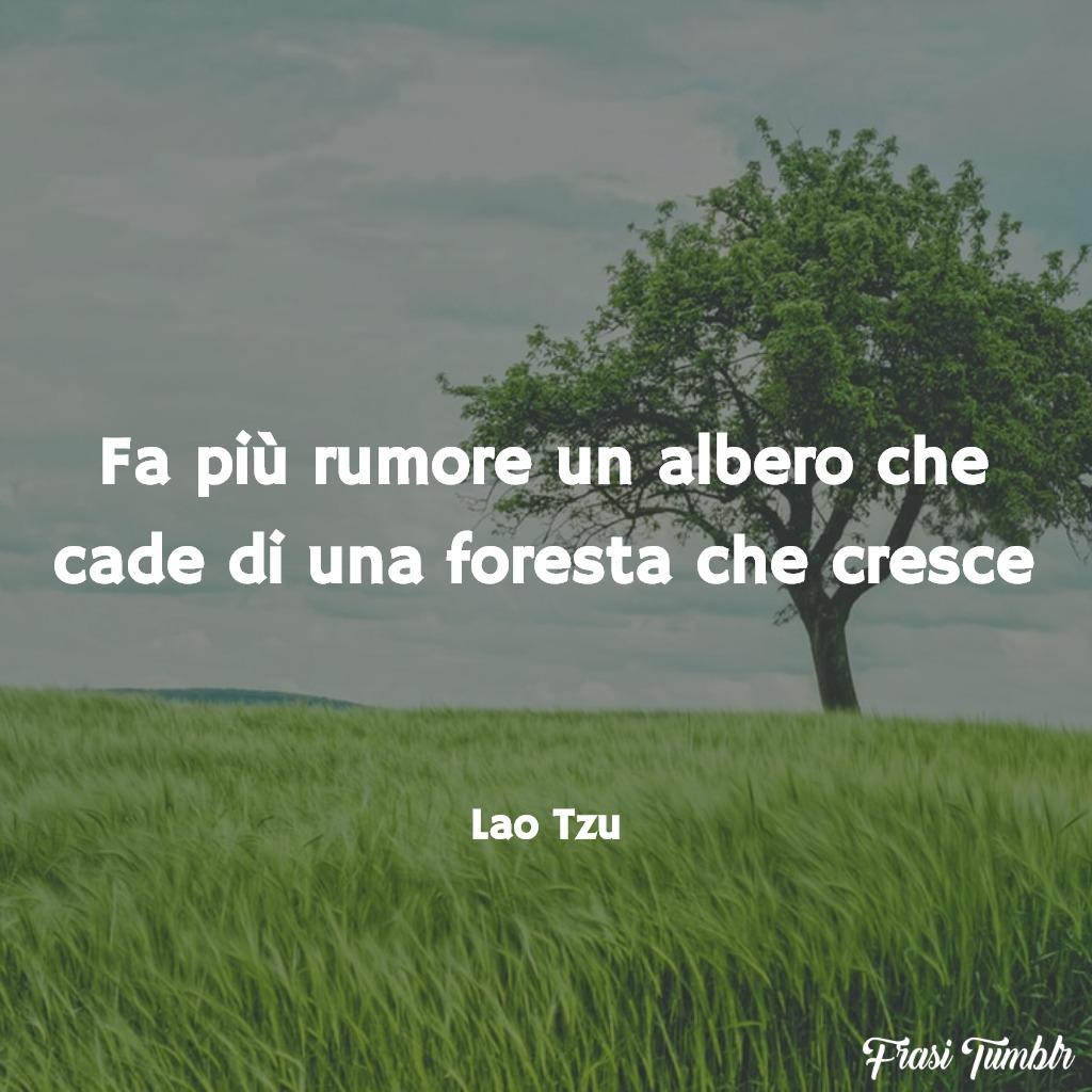 frasi-zen-vita-rumore-albero-cade-foresta-cresce