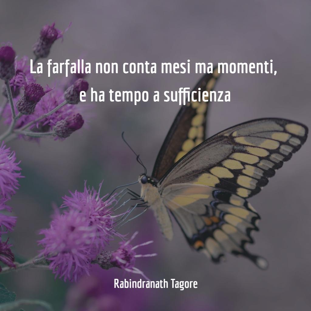 frasi-tempo-passa-farfalla