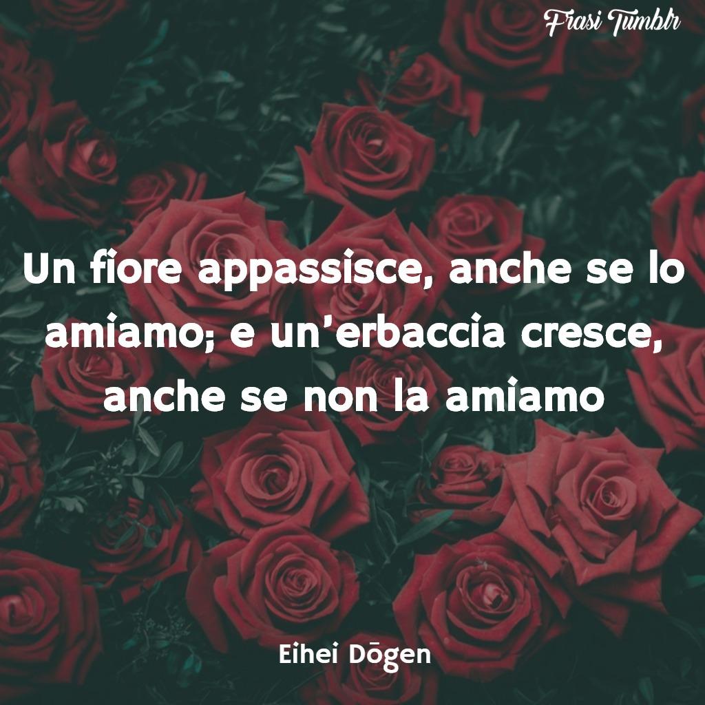 frasi-zen-amore-fiore-appassisce-erbaccia-cresce