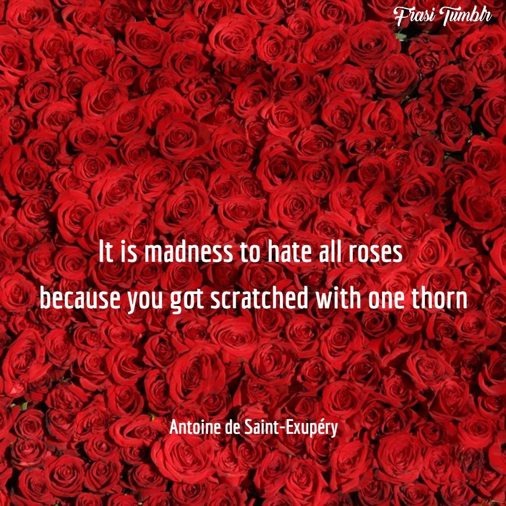 frasi-odio-inglese-rose