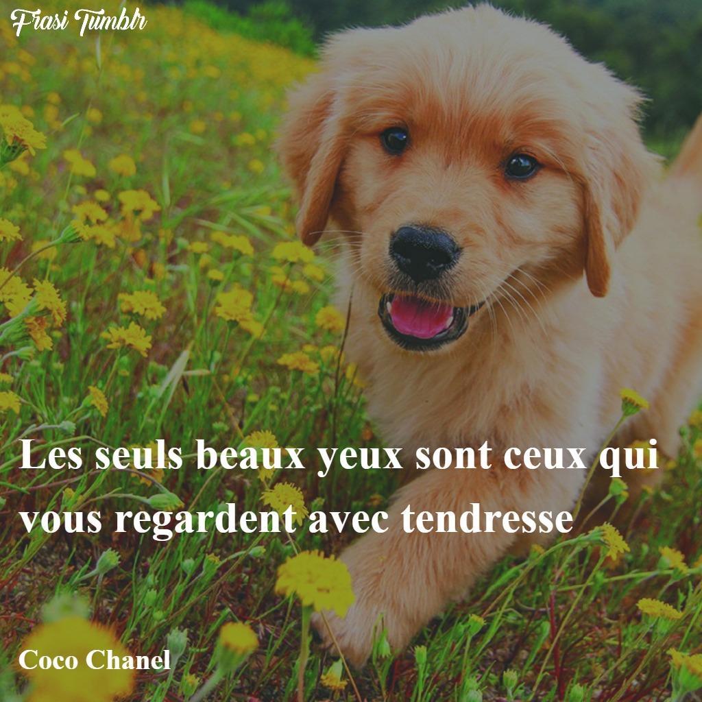 frasi-belle-famose-francese-occhi-tenerezza