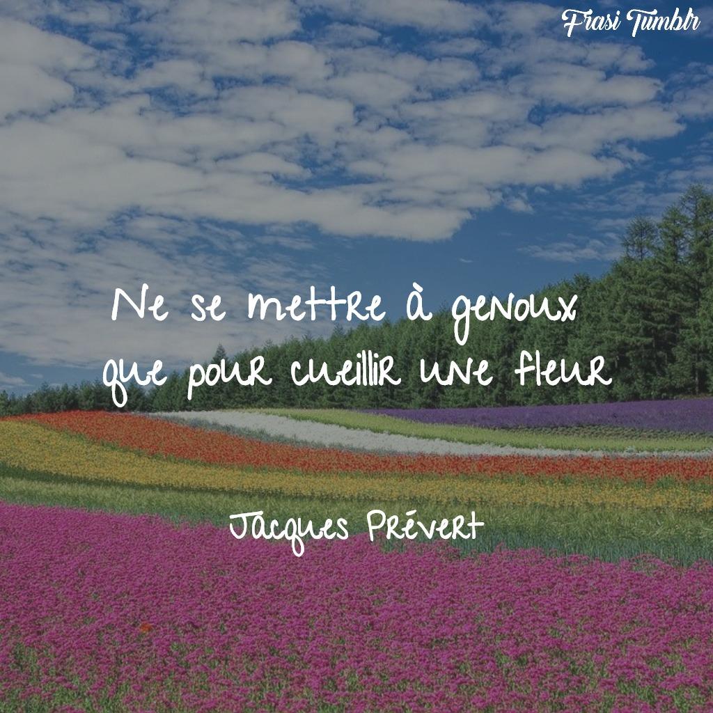 frasi-belle-francese-raccogliere-fiori