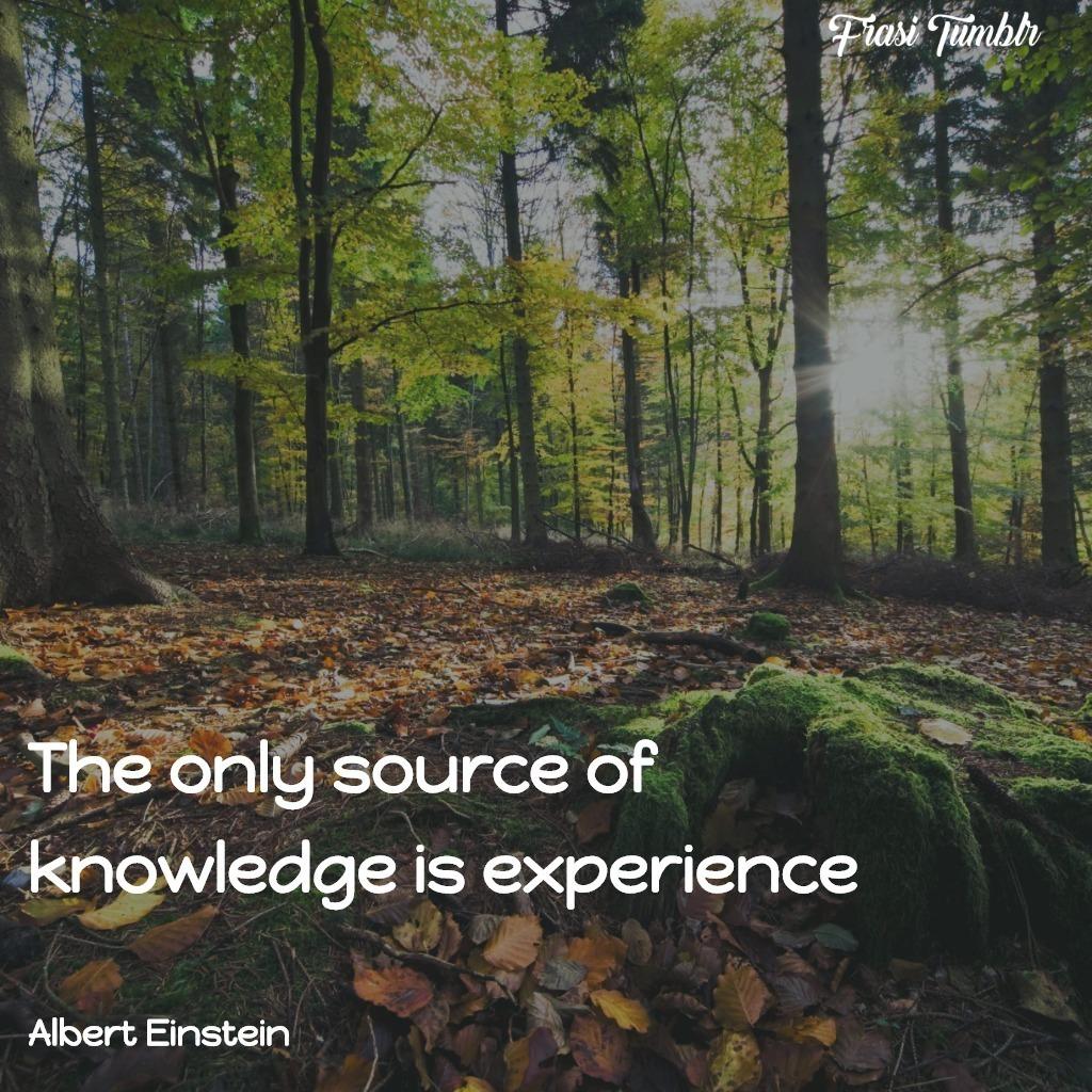 frasi-ignoranza-inglese-einstein-conoscenza-esperienza