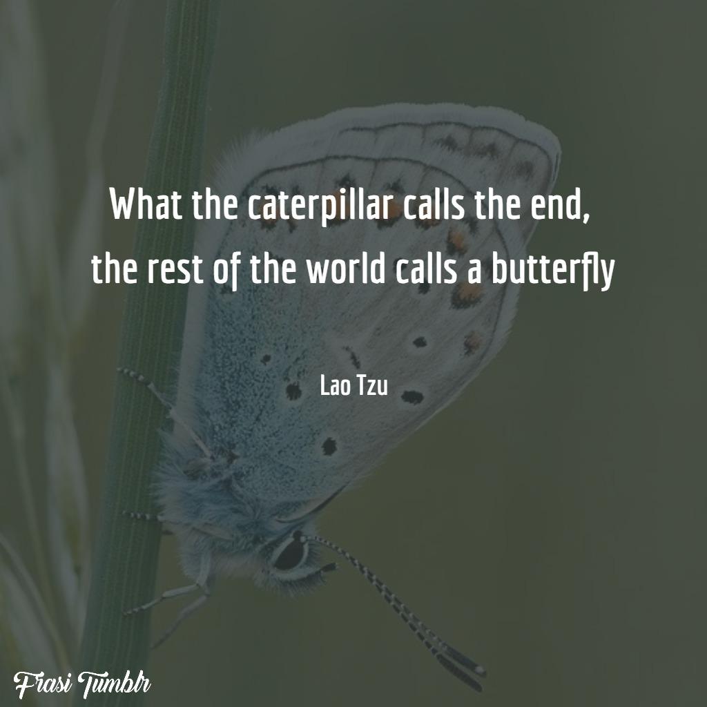 frasi-lau-tzu-inglese-farfalla-battito-ali