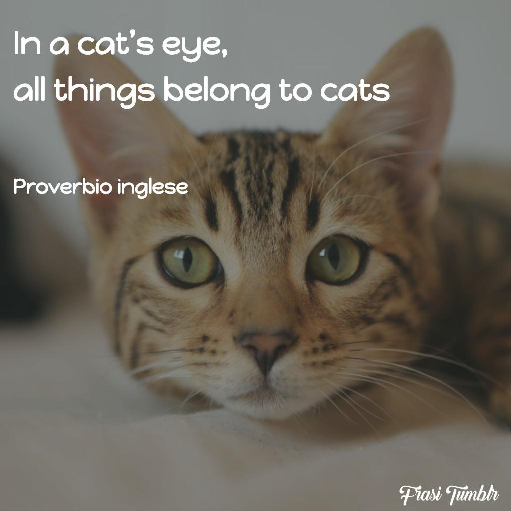 frasi-occhi-sguardo-inglese-gatti