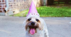 auguri di buon compleanno divertenti