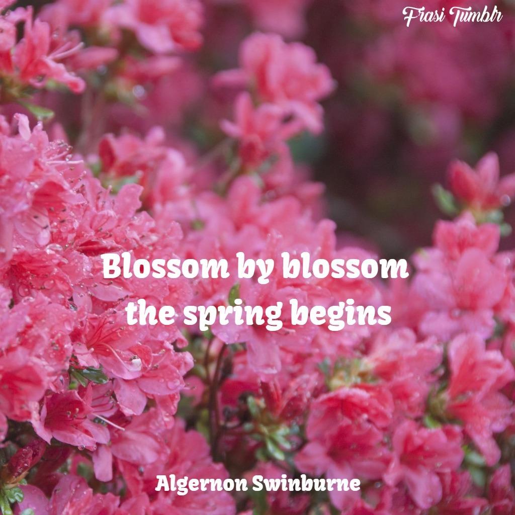 frasi rose inglese primavera fiori