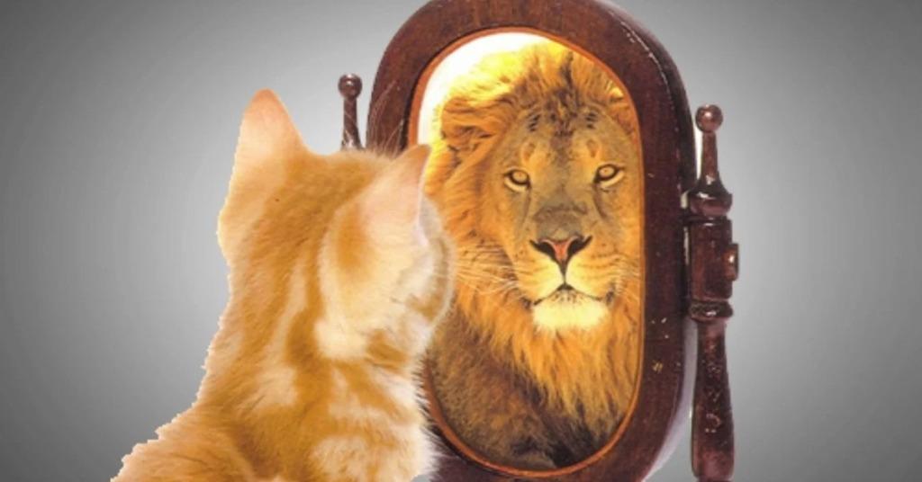 frasi sull autostima