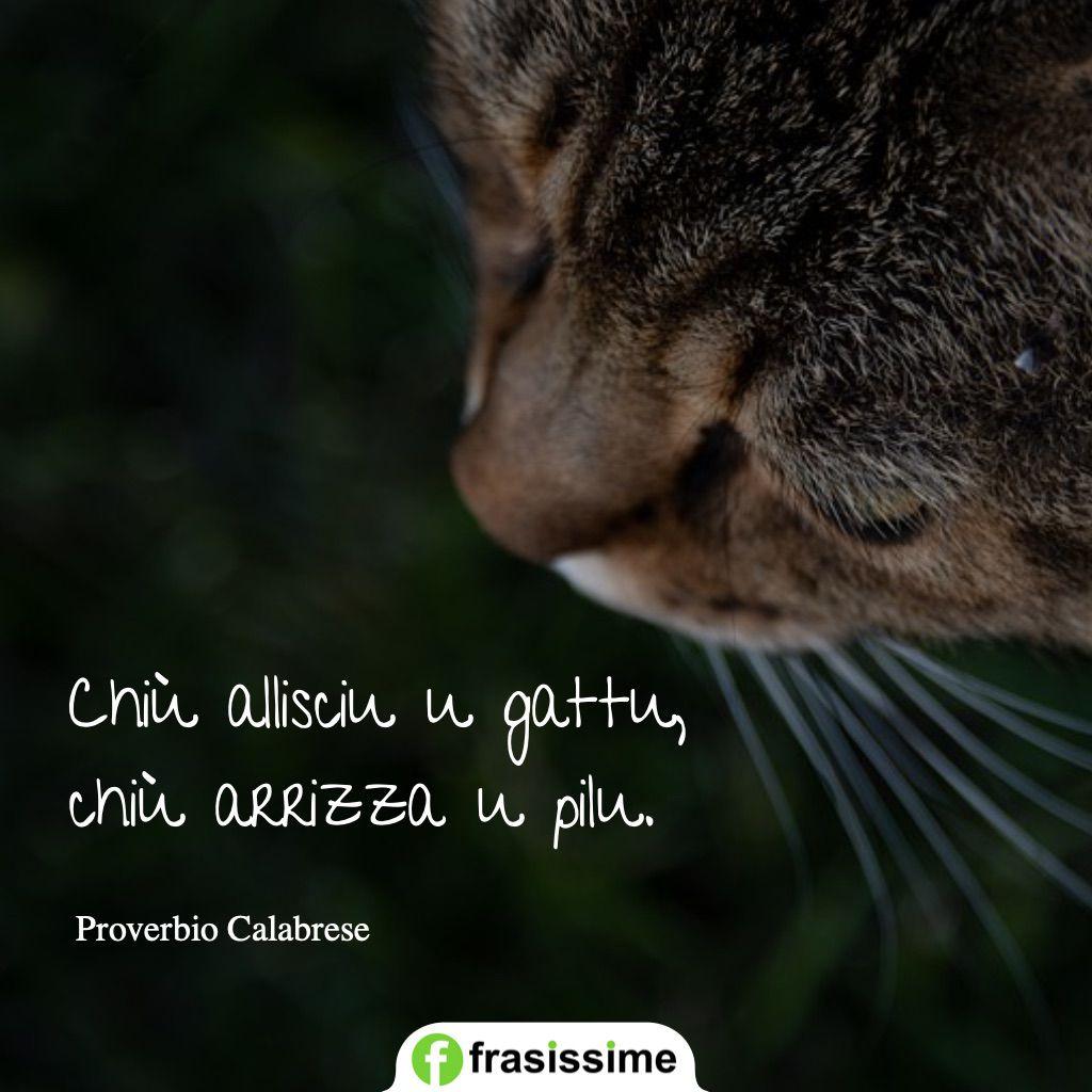 proverbi calabresi lisci gatto rizza pelo