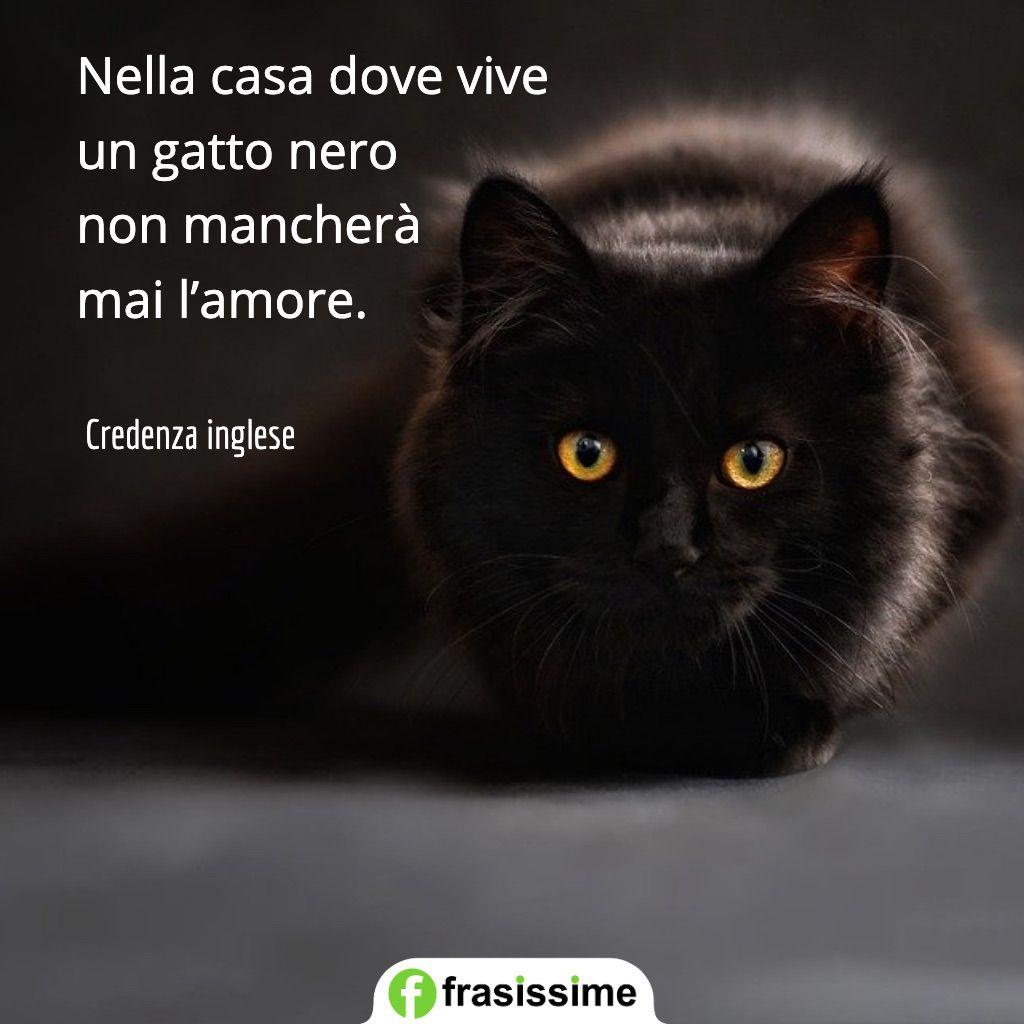 proverbi sui gatti casa vive gatto nero amore
