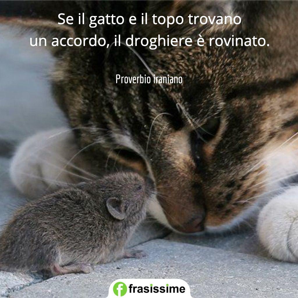 proverbi sui gatti topo accordo droghiere rovinato