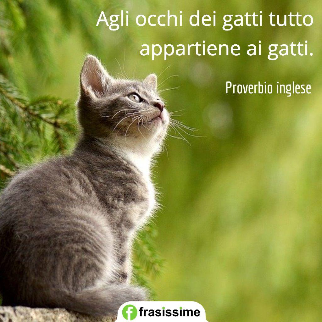 proverbi sui gatti tutto appartiene