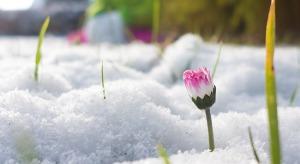 immagini frasi primavera belle