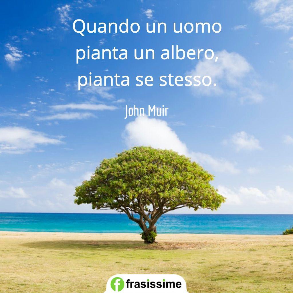 frasi alberi quando uomo pianta se stesso muir