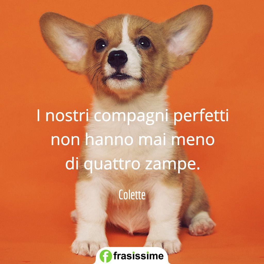 frasi cani compagni perfetti meno quattro zampe colette