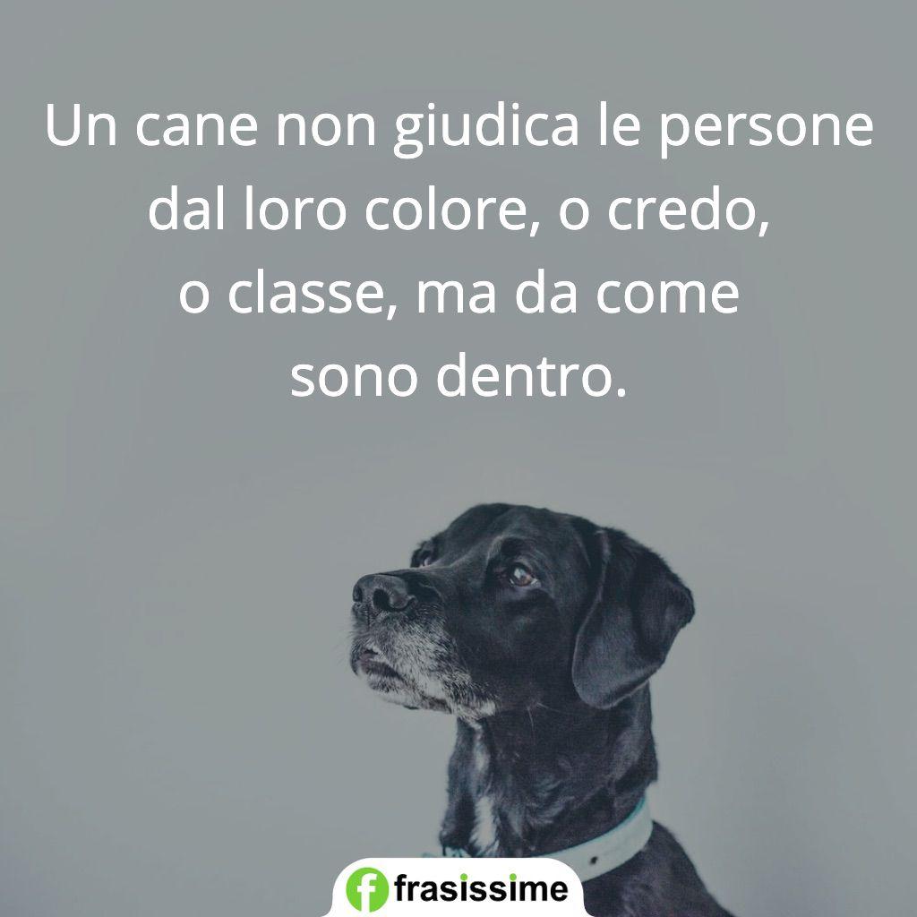 frasi cani non giudica persone come sono dentro