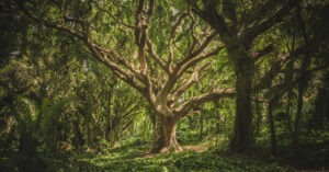 frasi sugli alberi