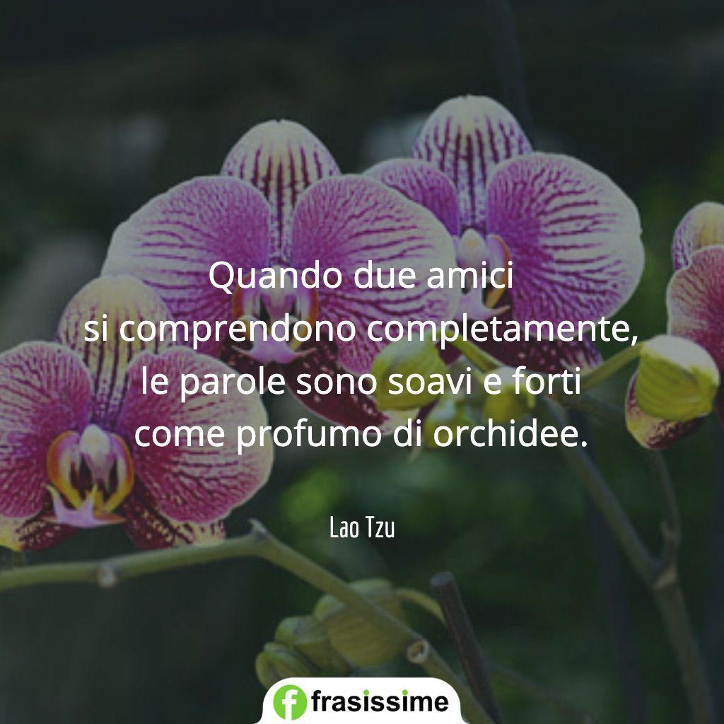 frasi sugli amici comprendono completamente profumo orchidee lao tzu