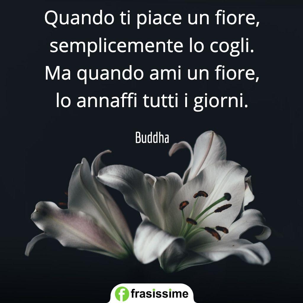 frasi tempo amore piace fiore cogli annaffi tutti giorni buddha