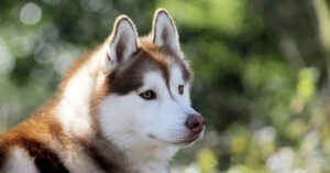 nomi per cani grandi femmine