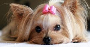 nomi per cani piccoli femmine