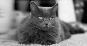 nomi per gatti grigi