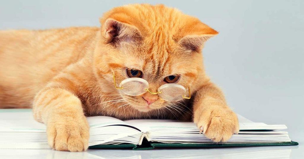 poesie sui gatti